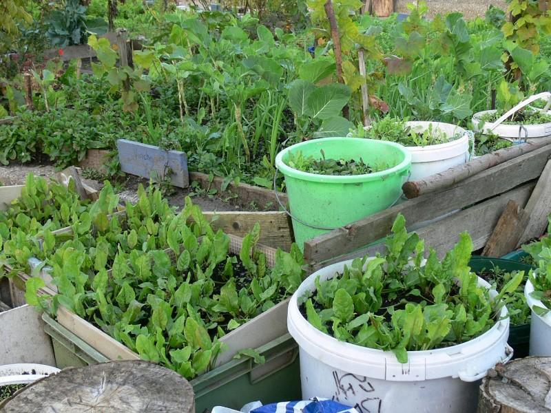 L'agriculture urbaine récompensée