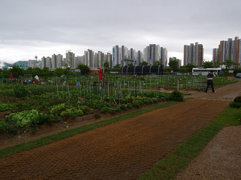 Les jardins partagés de Gangdong-Gu. © Caroline Hartley-Cityside