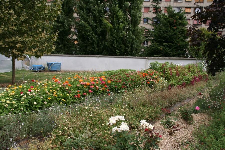 Projet lauréat : flore urbaine