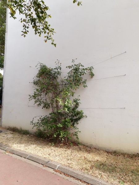 Caserne Kellermann, mur 10 - Annie Marochin, Ville de Paris@