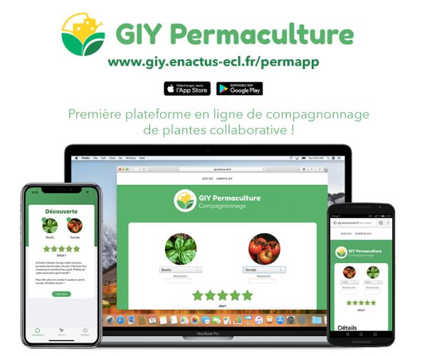 association tomates permaculture
