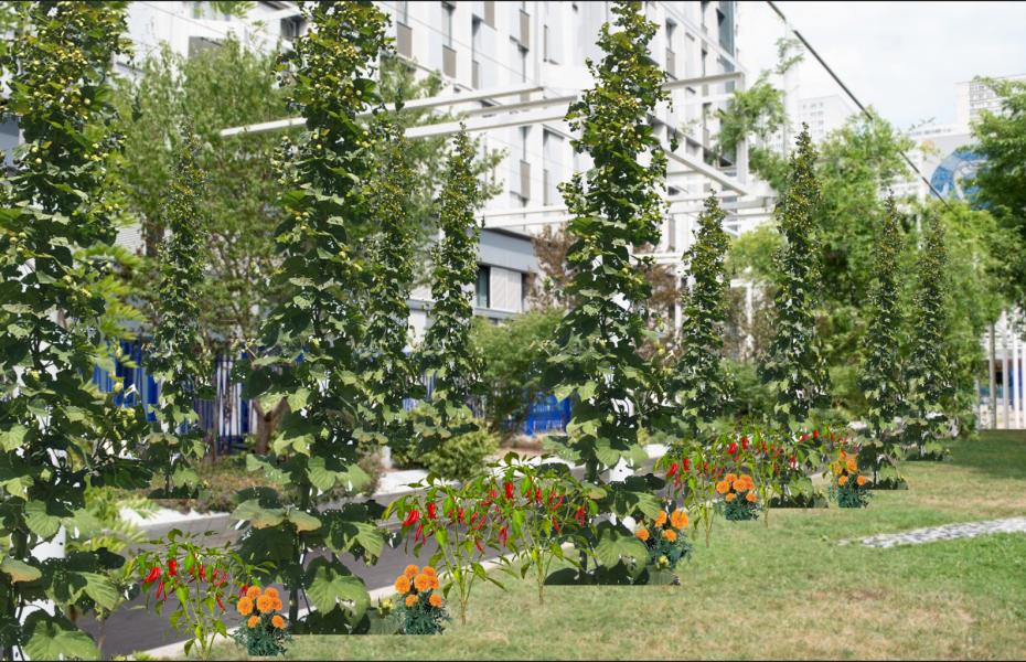Projet Cityhops - Square Samuel Beckett