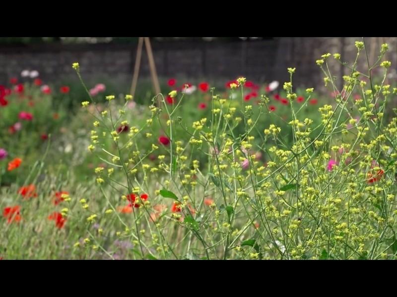 Urban flower farm in Belleville