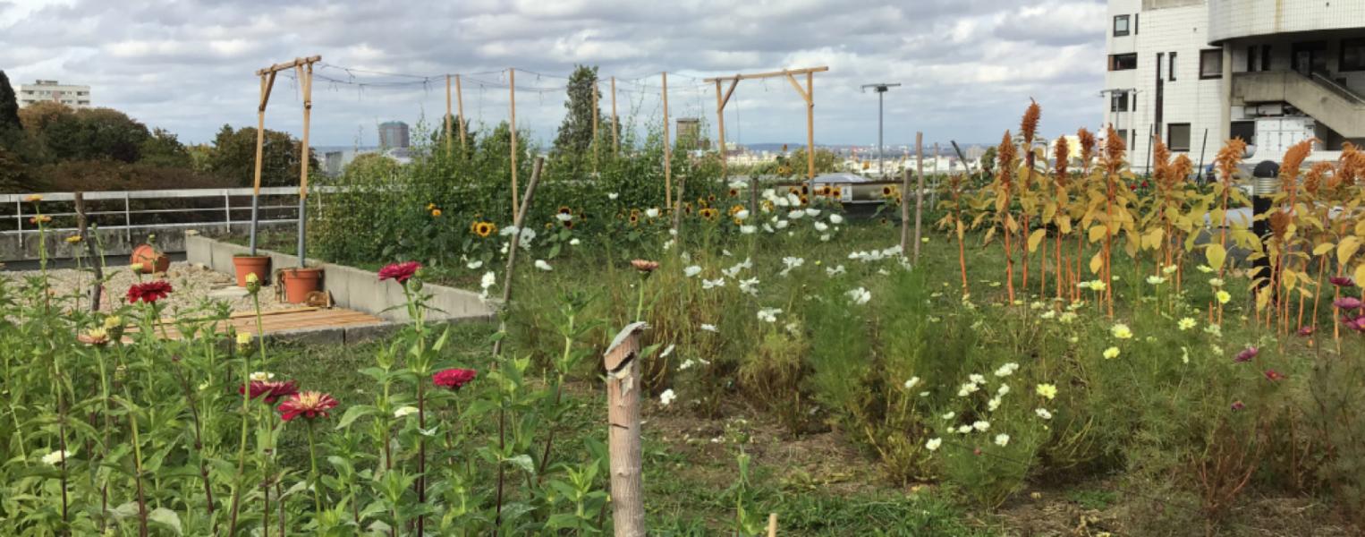 Ferme Florale Urbaine APHP Hôpital Robert Debré crédits DEVE