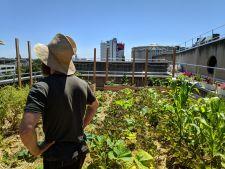 L'agriculture urbaine, pourquoi ? | Plantons le décor ! | Parisculteurs / Appel à Projets