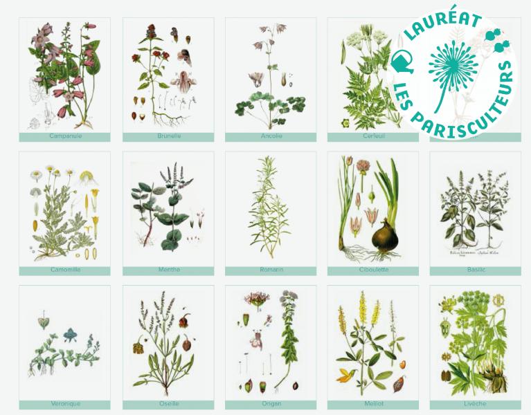 Projet lauréat : Un jardin des simples en coeur d'ilot
