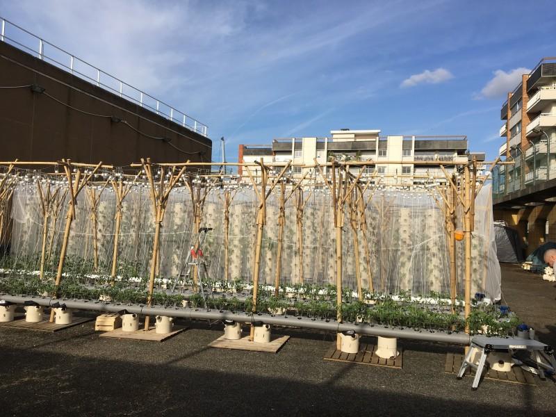 Gymnase de la cour des Lions. Projet en installation - 23/04/2018. Source : Groupement GreenTeam Frédéric Chouzenoux©
