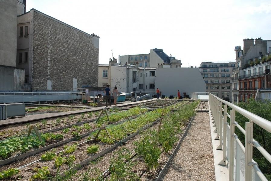 Terrasse Jean Dame. Source : Mairie de Paris Jean-Pierre Viguié ©