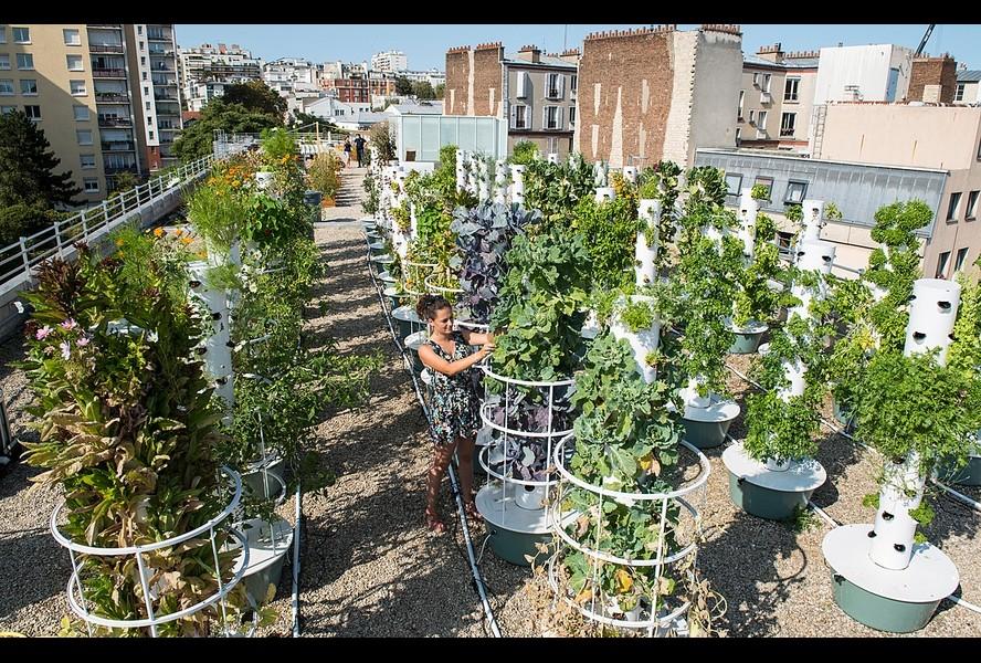 L'Arche végétale - Cueillette Urbaine 2020 - crédit Cueillette Urbaine