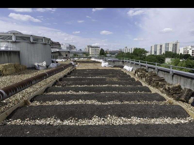 Projet lauréat : Germons Germaine ! Source : Jean-Pierre Viguié Ville de Paris®